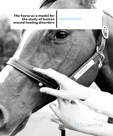 Professor Christine Theoret – The Horse As A Model For The Study Of Human Wound Healing Disorders