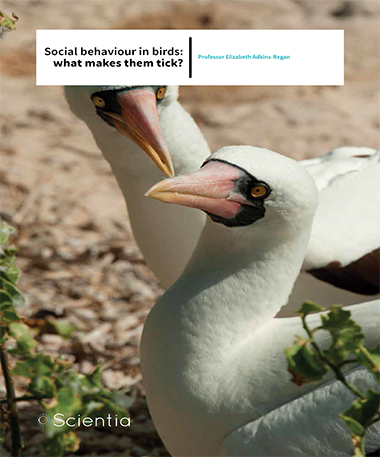 Professor Elizabeth Adkins-Regan – Social Behaviour In Birds: What Makes Them Tick?