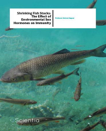 Professor Helmut Segner – Shrinking Fish Stocks: The Effect Of Environmental Sex Hormones On Immunity