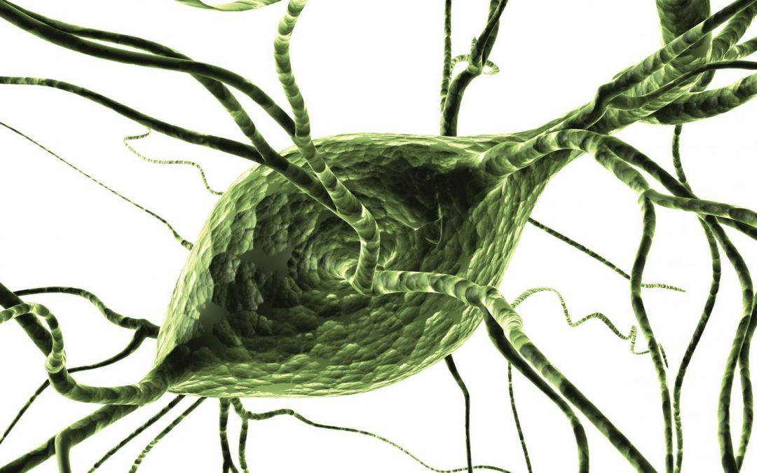 Professor Elizabeth Jonas – The Mitochondrion: The Powerhouse Behind Neurotransmission