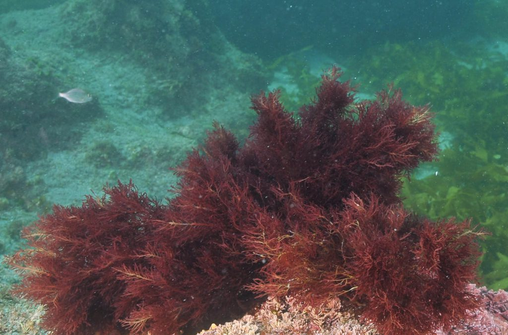 Dr Branwen Williams – Coralline Algae As A Climate Archive