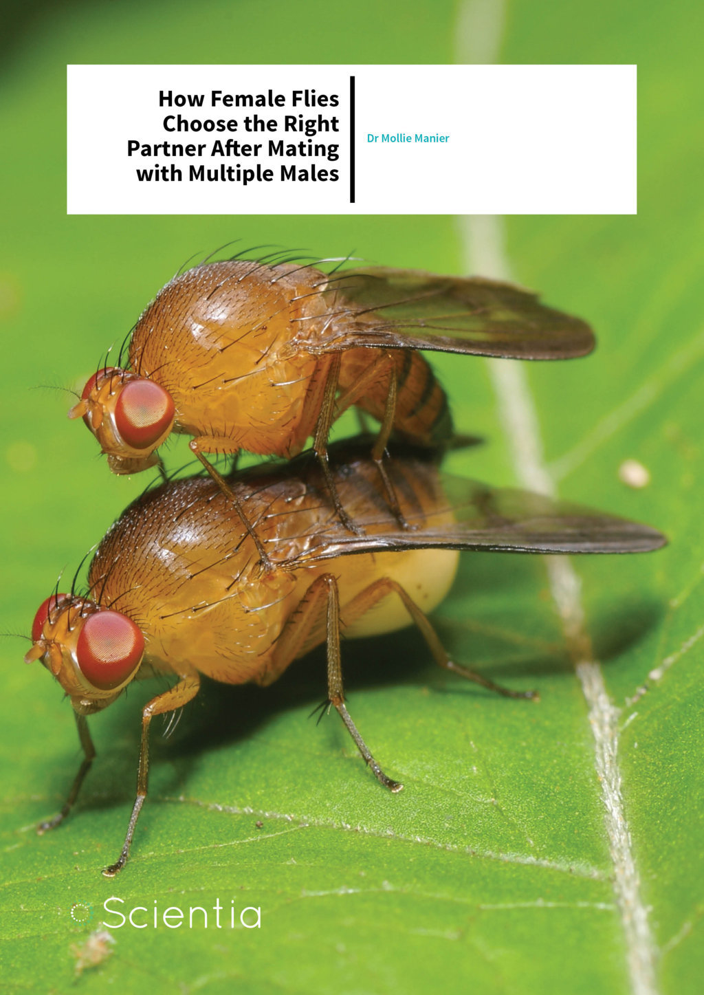 Dr Mollie Manier – How Female Flies Choose The Right Partner After Mating With Multiple Males