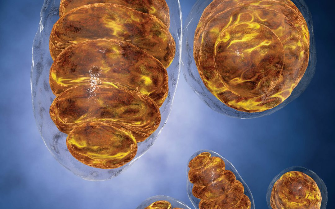 Professor Varda Shoshan-barmatz – Mitochondria – A Novel Target In The Fight Against Cancer