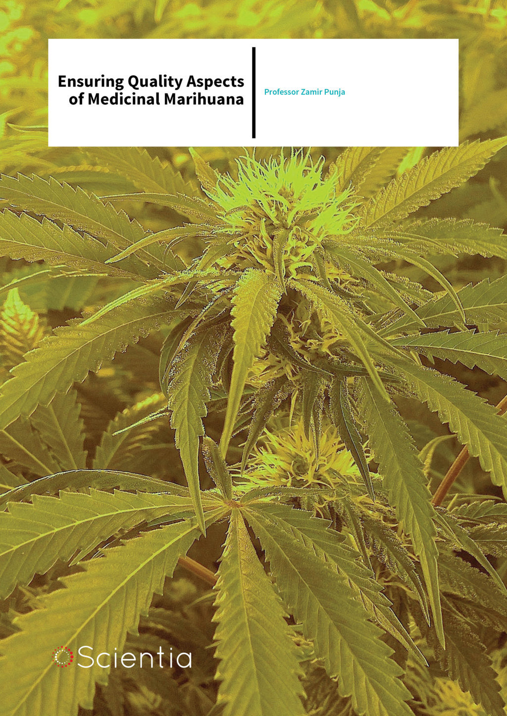 Professor Zamir Punja – Ensuring Quality Aspects of Medicinal Marihuana