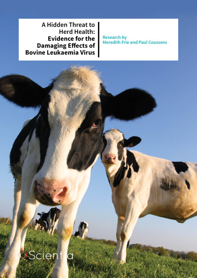 Meredith Frie – A Hidden Threat to Herd Health: Evidence for the Damaging Effects of Bovine Leukaemia Virus
