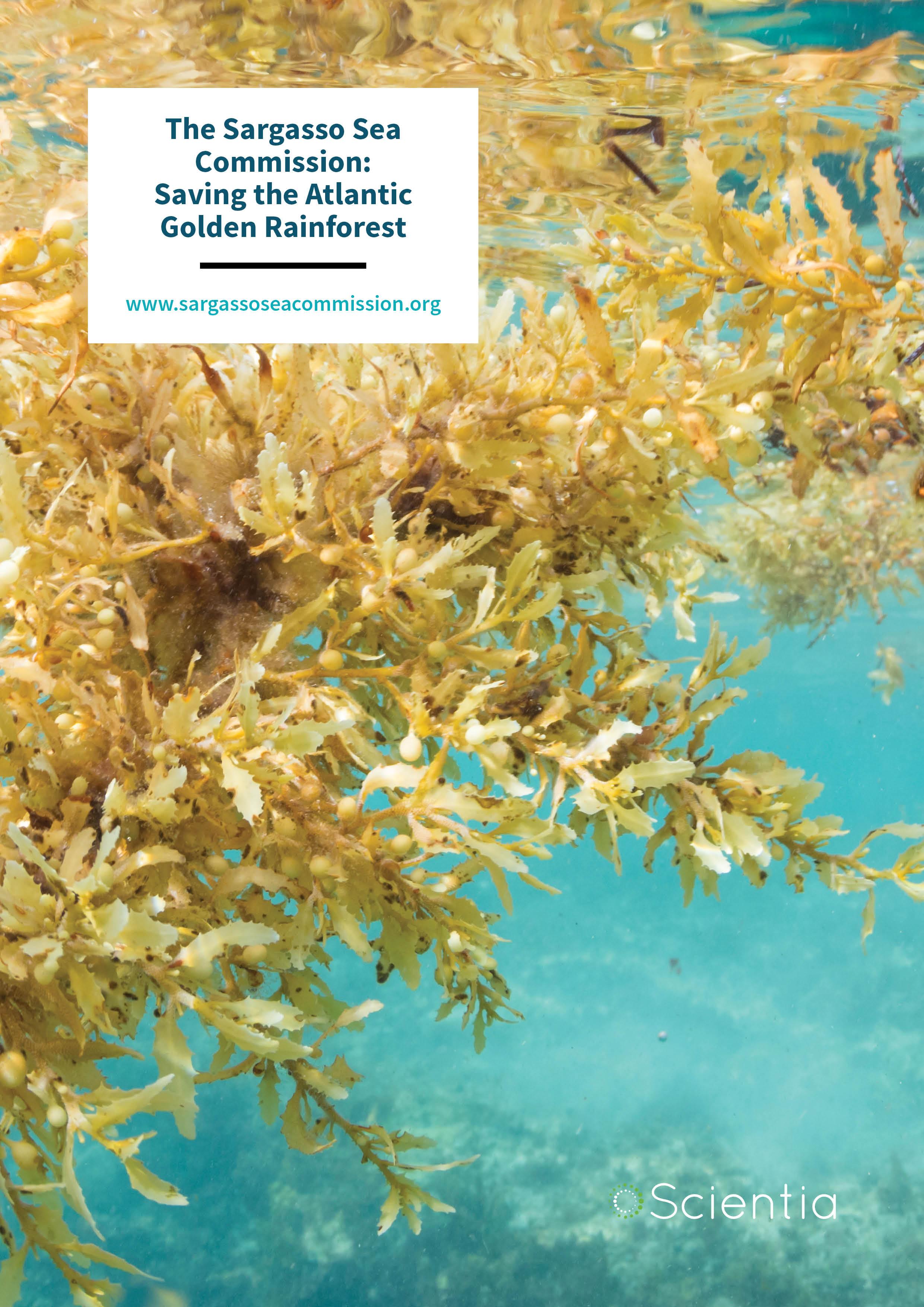 The Sargasso Sea Commission: Saving the Atlantic Golden Rainforest
