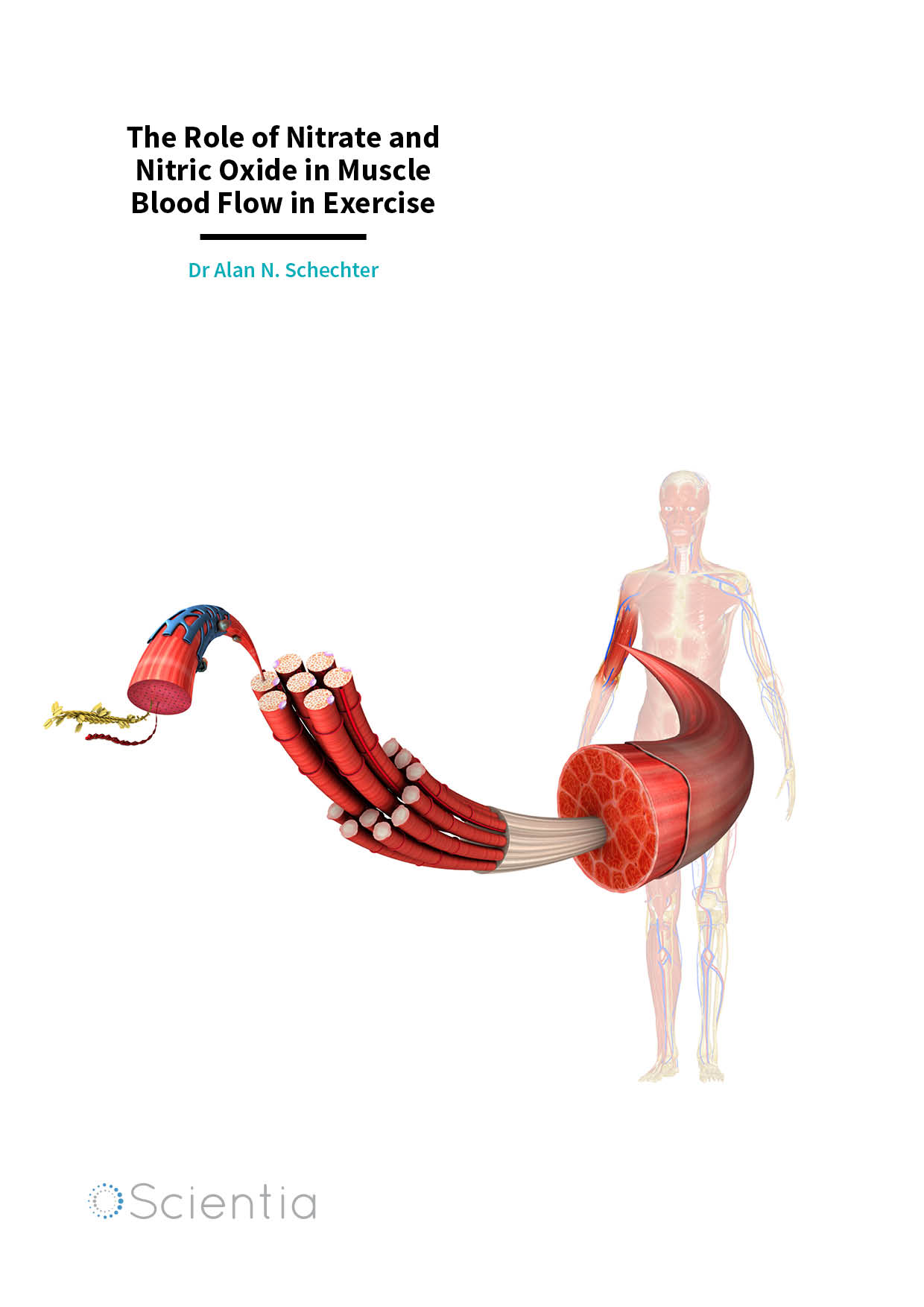 Dr Alan N. Schechter – The Role of Nitrate and Nitric Oxide in Muscle Blood Flow in Exercise
