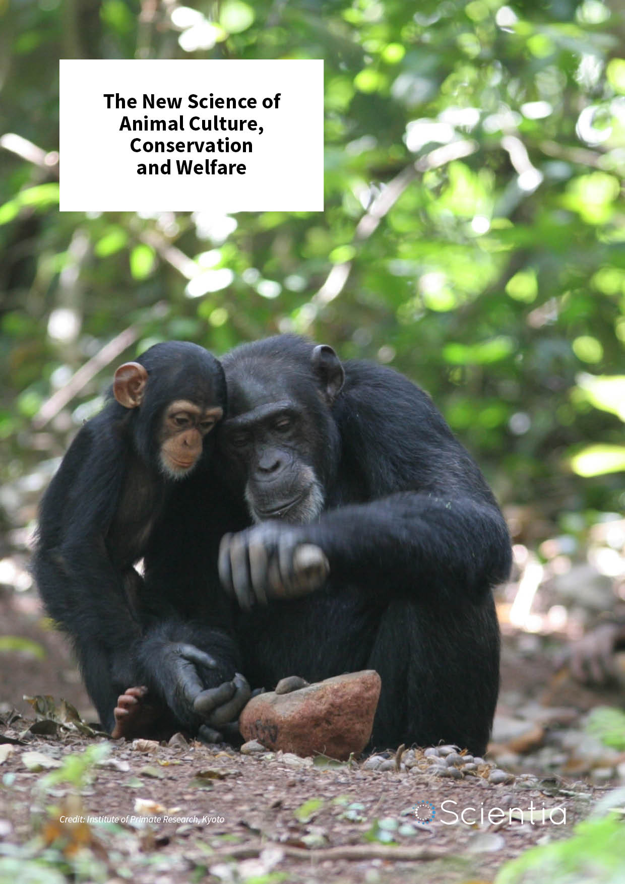Professor Andrew Whiten – The New Science of Animal Culture, Conservation and Welfare