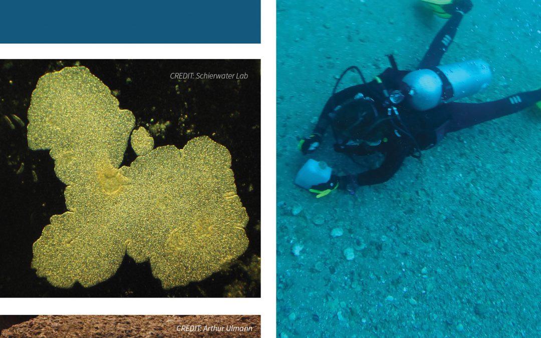 Professor Bernd Schierwater – Mother of Animals: Introducing the Placozoa
