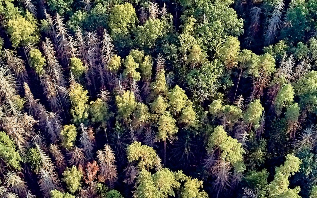 Dr Cedric Ogden – Help from Above: Using Drones to Combat Pine Forest Pests
