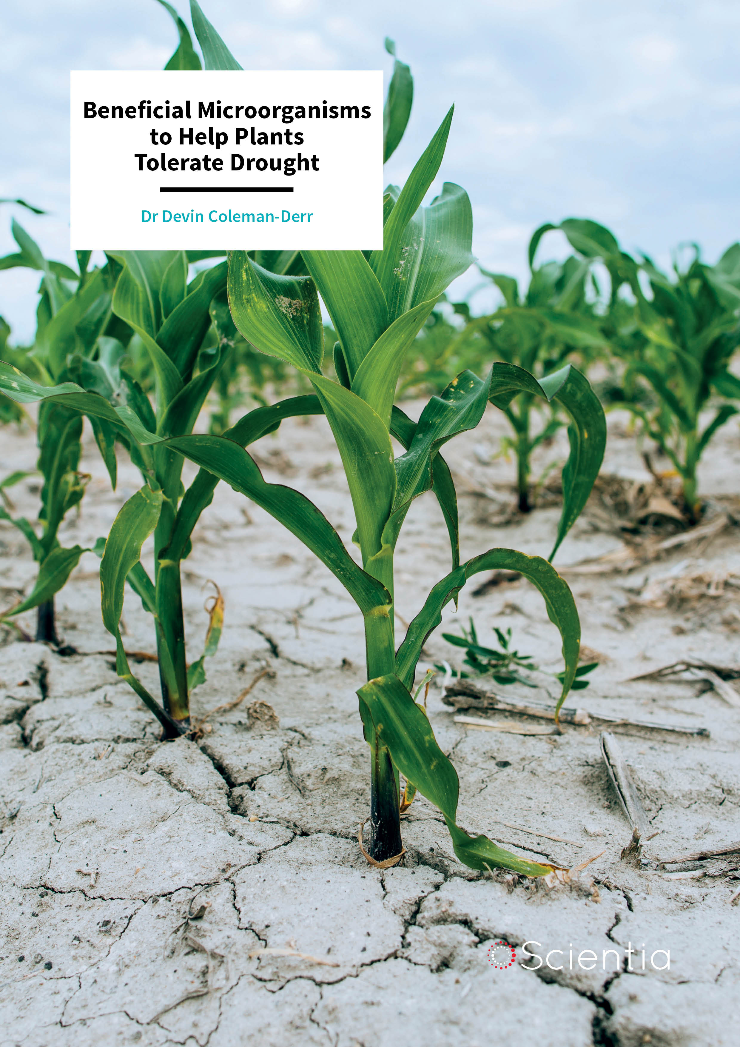 Dr Devin Coleman-Derr – Beneficial Microorganisms to Help Plants Tolerate Drought