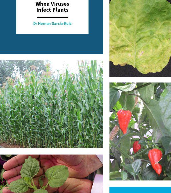 Dr Hernan Garcia-Ruiz – When Viruses Infect Plants