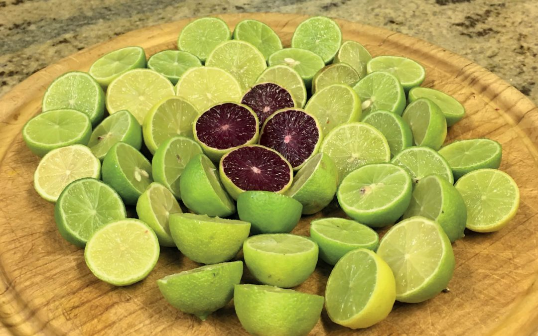 Dr James G. Thomson – Lilac Limes: More Than Just A Pretty Fruit