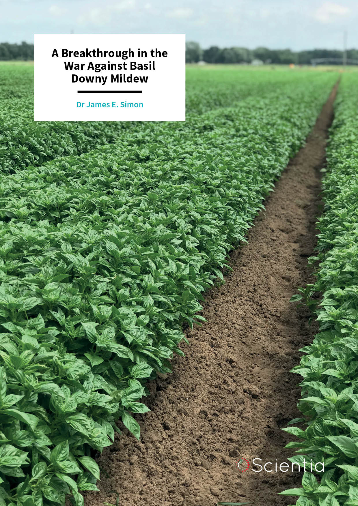 Dr James Simon – A Breakthrough in the War Against Basil Downy Mildew