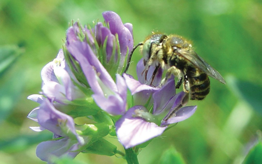 Dr Johanne Brunet – Buzzing & Blooming: Bee-Flower Interactions in Crop Production