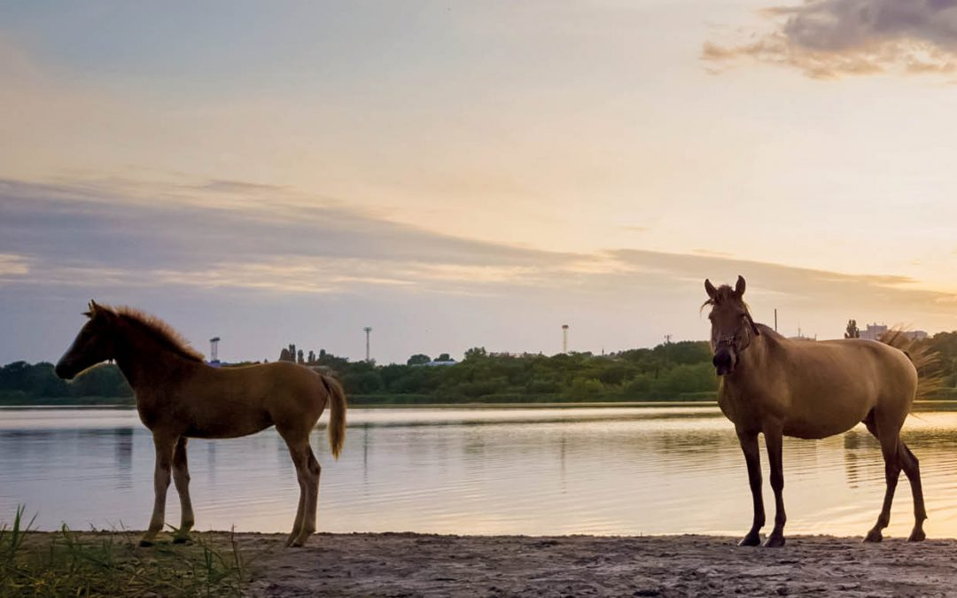 Dr Kathleen Mullen – Links Between Fracking and a Rare Birth Defect in Racehorses