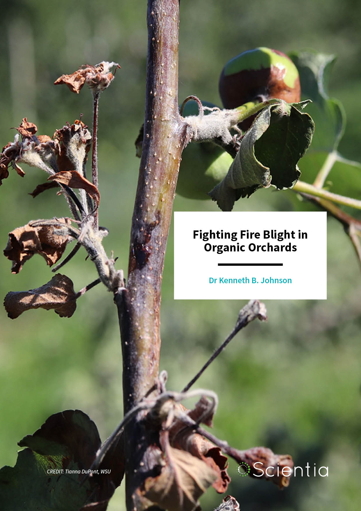 Dr Kenneth Johnson – Fighting Fire Blight in Organic Orchards