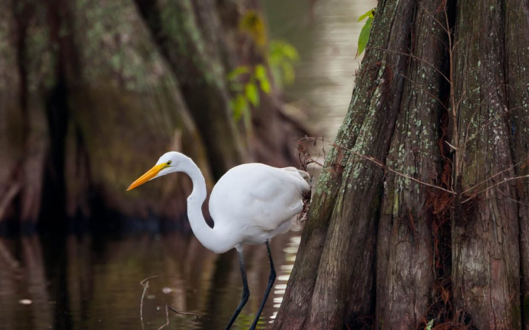 Dr Kim de Mutsert – Identifying Effective Strategies to Protect Louisiana's Precious Wetlands