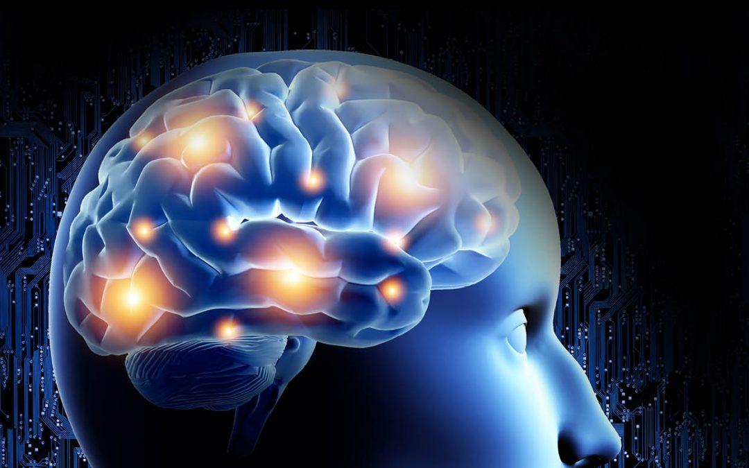 Dr Kristen Kroll – New Models to Understand the Intricacies of Neurodevelopmental Disorders