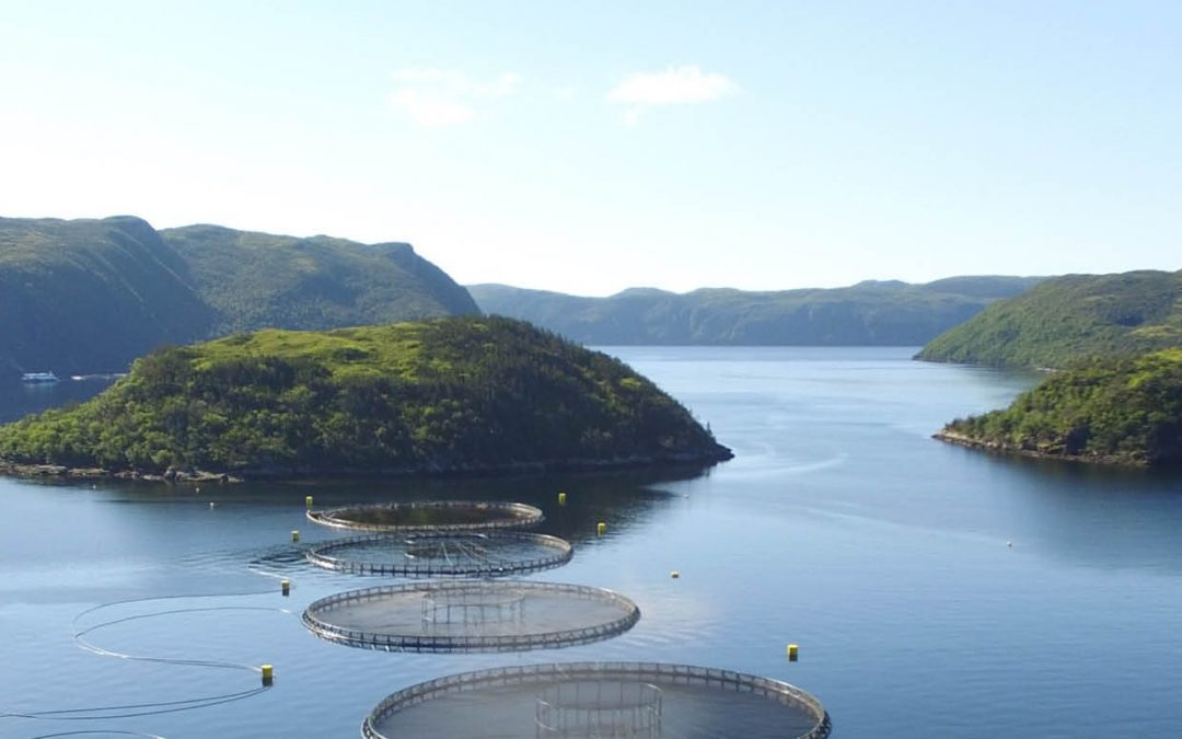Dr Kurt Gamperl – Exploring How Fish Adapt to Climate Change: Sustainable Aquaculture and Species Conservation