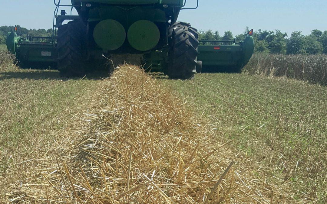 Dr Lauren Lazaro – Weeding out Herbicide Resistance