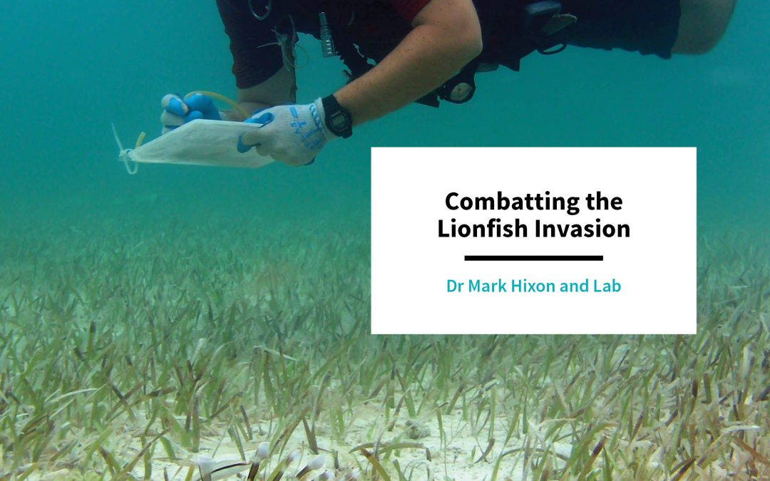 Dr Mark Hixon – Combatting the Lionfish Invasion