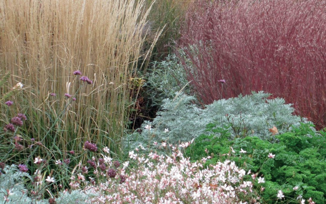Dr Mary Meyer – Going Native with Grasses