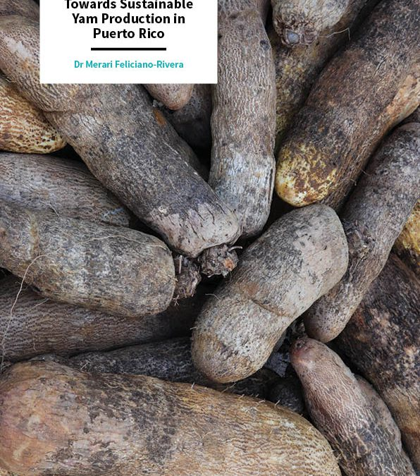 Dr Merari Feliciano-Rivera – Towards Sustainable Yam Production in Puerto Rico