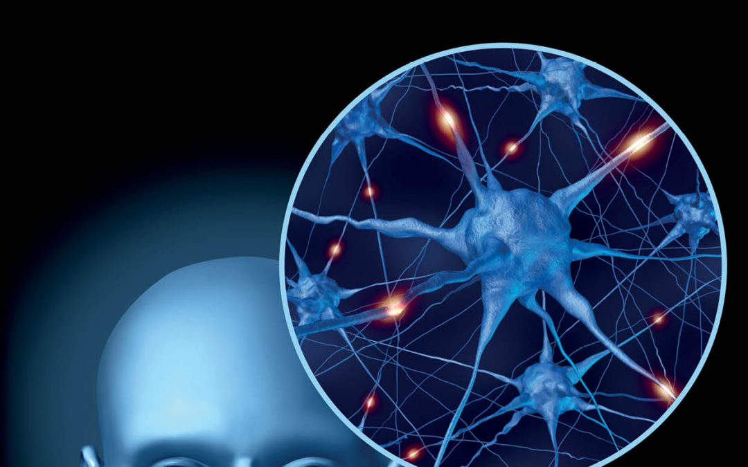 Dr Nicholas Spitzer – Neurotransmitter Switching: A New Form of Brain Plasticity