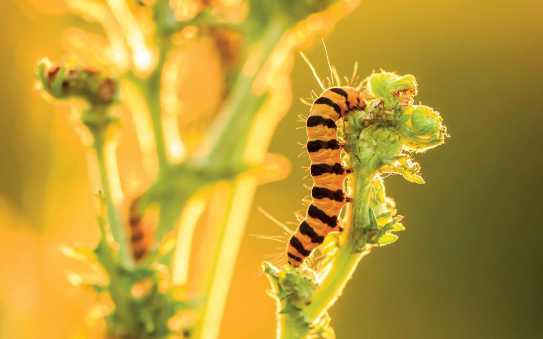 Dr Peter McEvoy – Biological Control in the Light of Contemporary Evolution