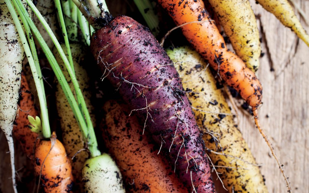 Dr Philipp Simon – Investigating Carrot Colours to Produce Healthier Crops