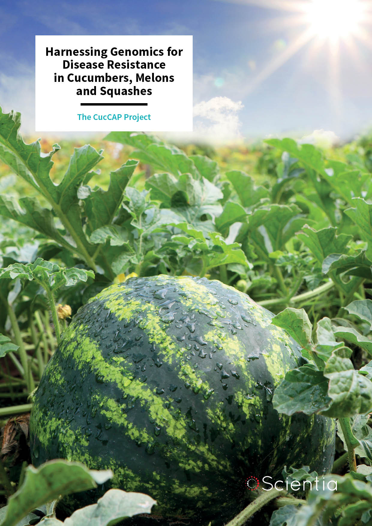 The CucCAP Project – Harnessing Genomics for Disease Resistance in Cucumbers, Melons and Squashes