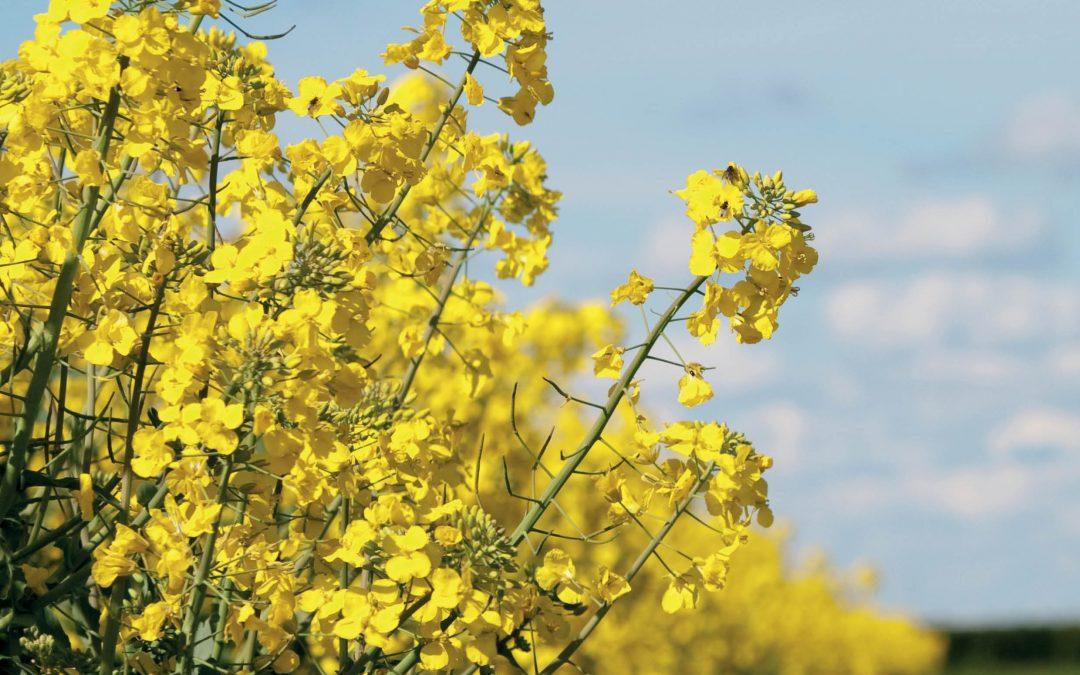 Dr Sanju Sanjaya – Gene Technology for Boosting Biodiesel Production