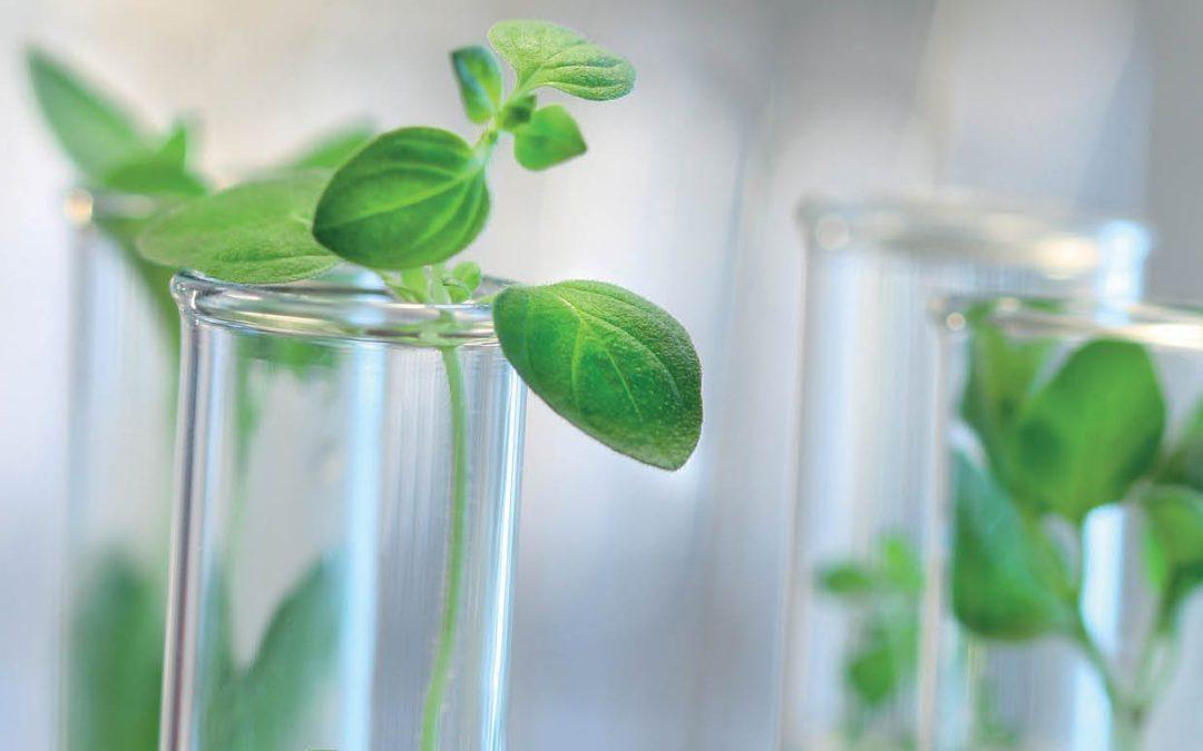 Dr Sanju A. Sanjaya | Bagyalakshmi Muthan – Creating Power Foods with Gene Technology