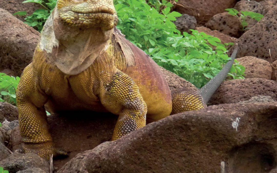 Dr Stephen Walsh – The Galapagos Initiative: Saving the Enchanted Islands