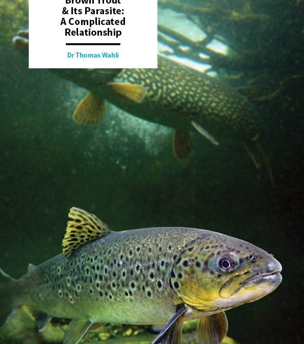 Dr Thomas Wahli – Brown Trout & Its Parasite: A Complicated Relationship